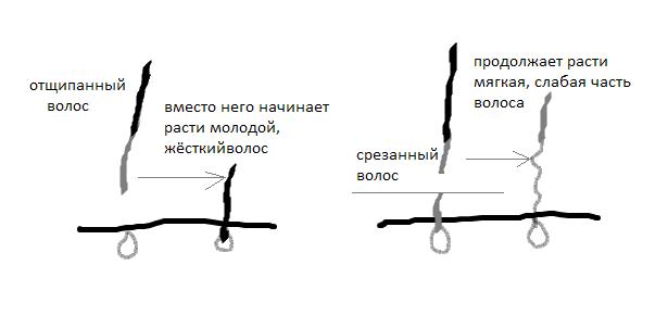 Тримминг заменяет керн-терьеру